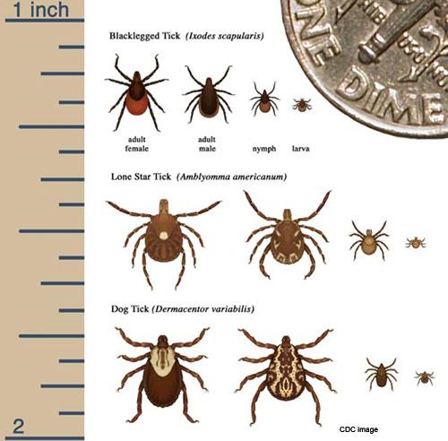 TickIdentification